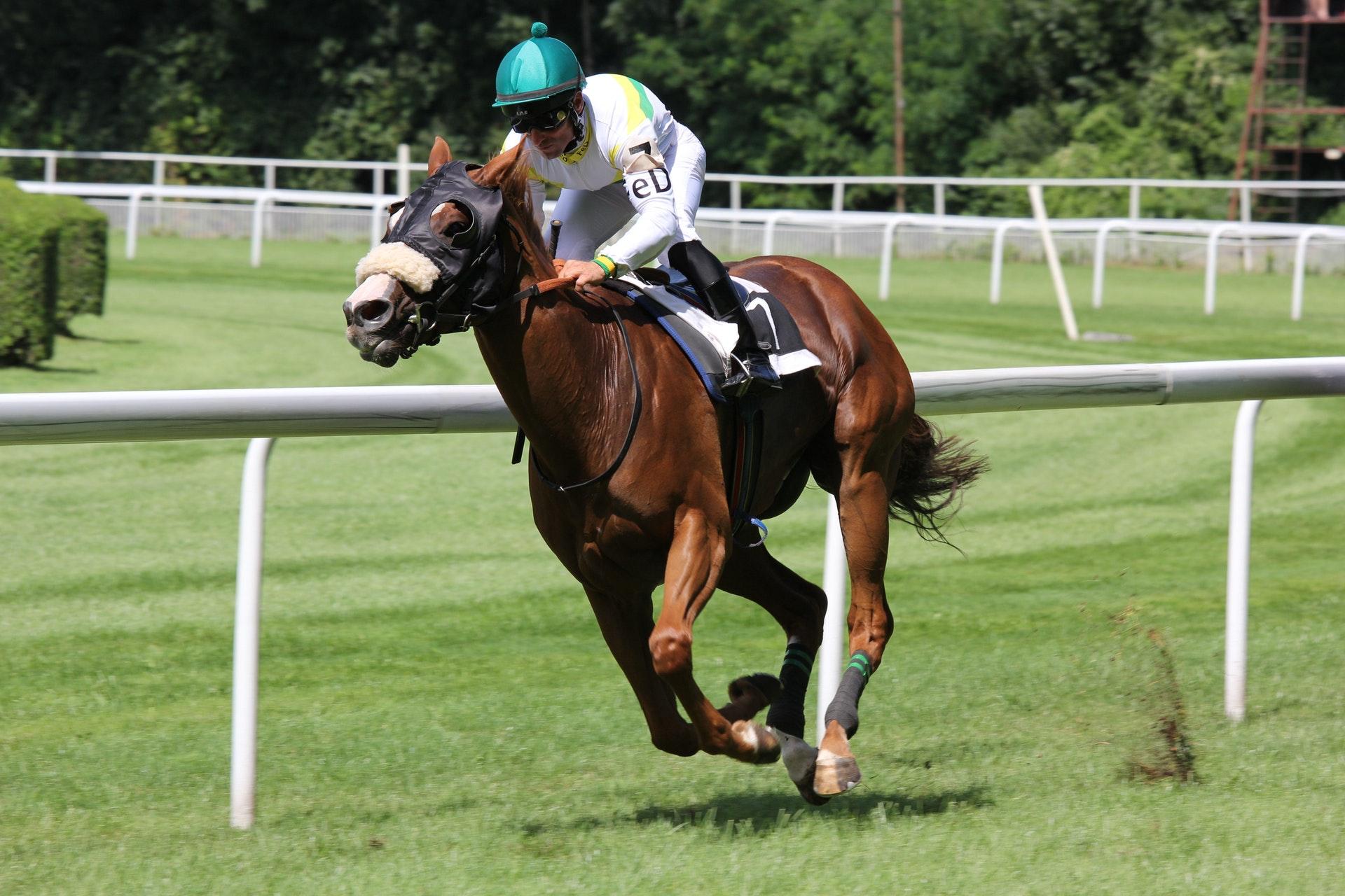 Laukkakisat hevosurheilun lajina