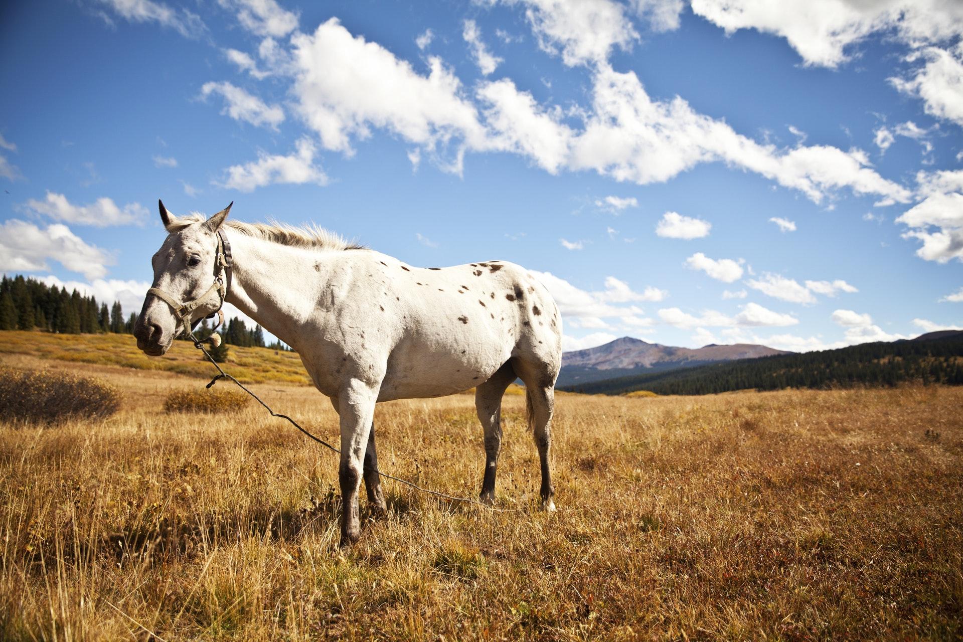 Vähänpuhuttu vikellys hevosurheilun lajina