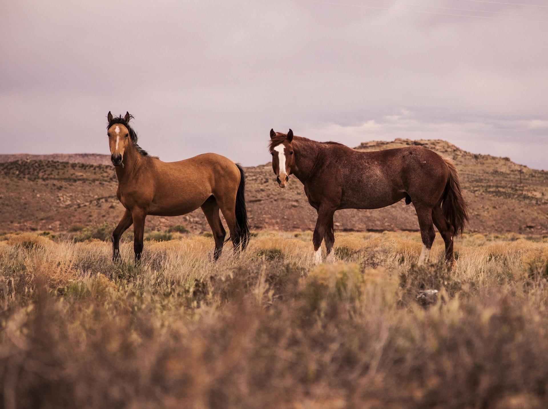 Hevosurheilu ja hevosten jalostus