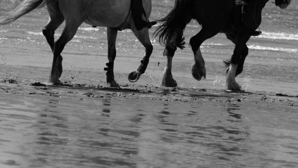 Ravit ja ratsastus, hevosurheilua Suomessa.