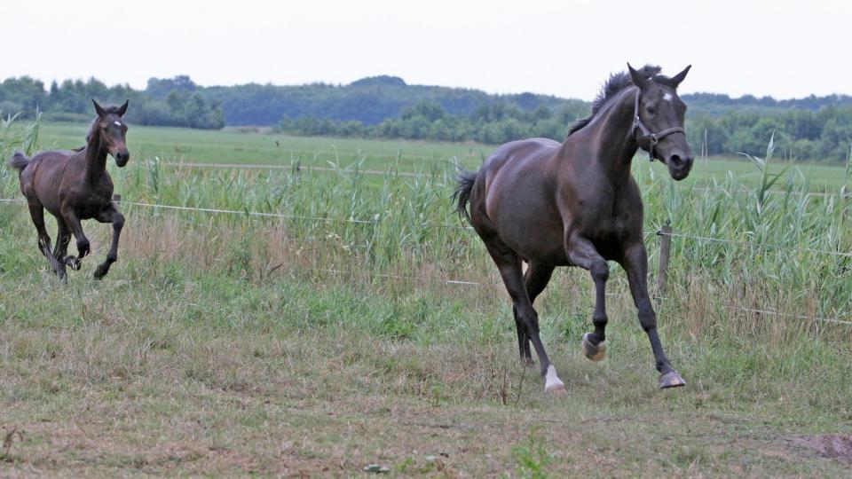 Hevosen hoito urheiluharrastuksessa